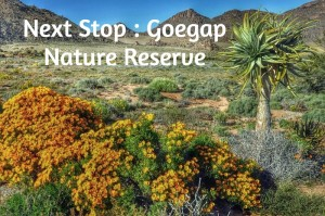 Next Stop : Goegap Nature Reserve